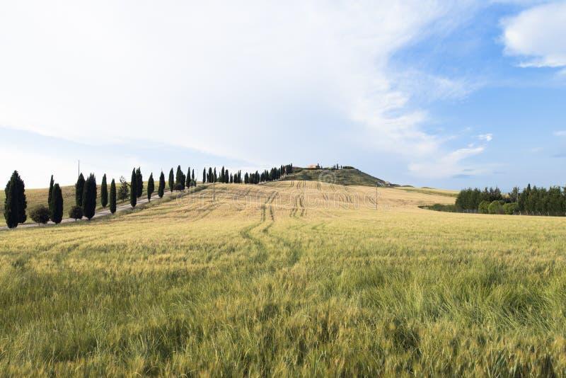 Ein lokalisiertes Haus und Zypressen auf einem Gebiet in Val d 'Orcia oder Valdorcia, ein sehr populäres Reiseziel in Toskana, It stockbilder