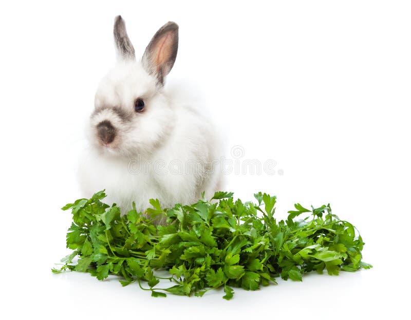 Ein lustiges Kaninchen sitzt nahe Grüns stockfotografie