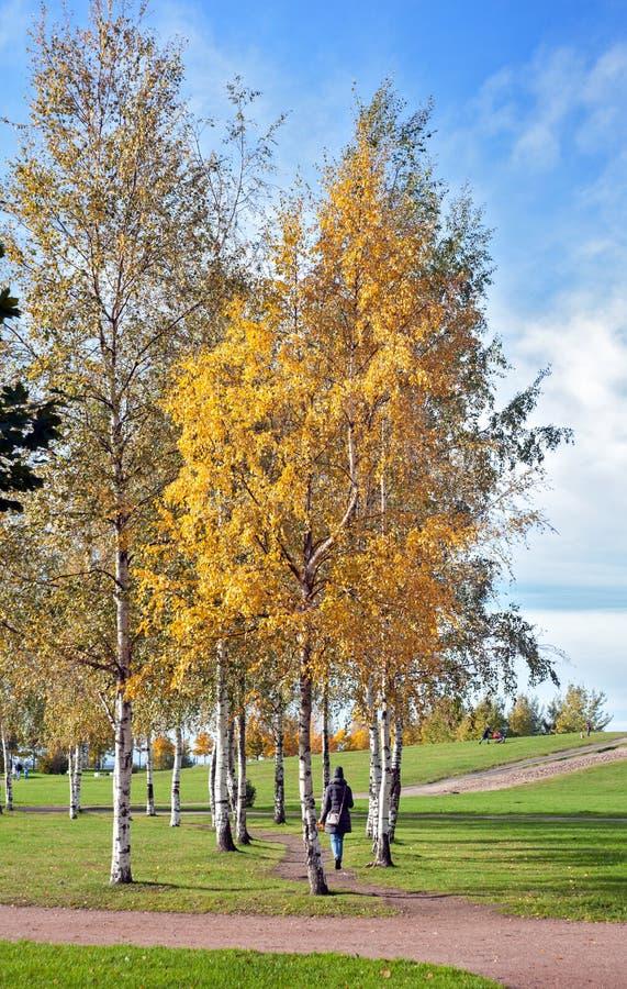 Ein Mädchen, das entlang den Weg einer sonnigen Herbstbirkengasse mit gelben Blättern gegen einen blauen Himmel geht stockfoto