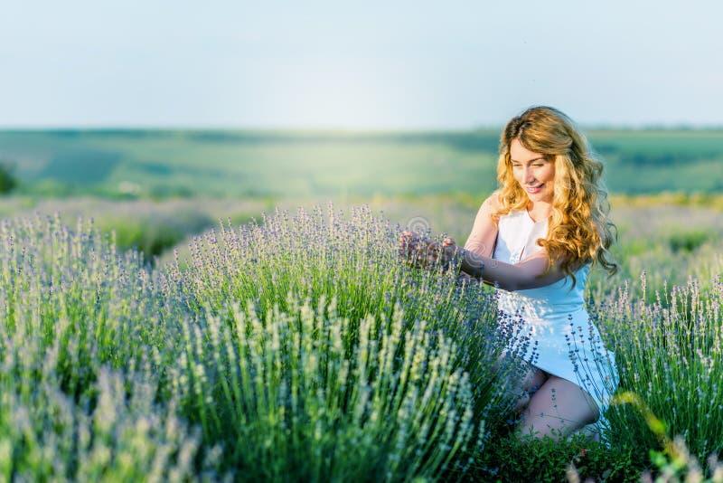 Ein Mädchen im weißen Kleidersammeln blüht auf dem Lavendelgebiet lizenzfreie stockfotografie