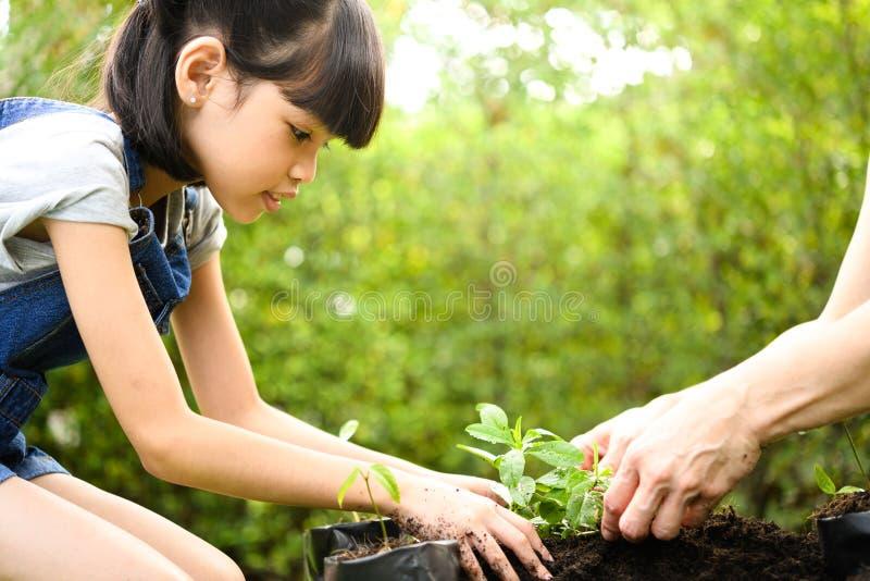Ein Mädchen und ein Elternteil, die Jungpflanzen auf Boden pflanzen stockfotografie