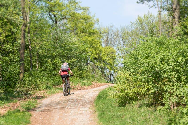 Ein männliches mountainbiker von hinten aufwärts im Wald gehen lizenzfreies stockbild