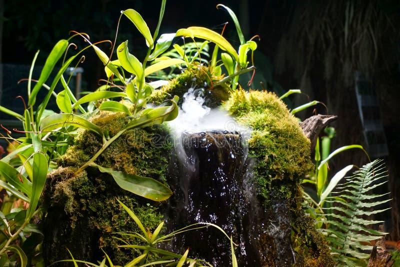 Ein magischer Wasserfall mit Anlagen stockfotos