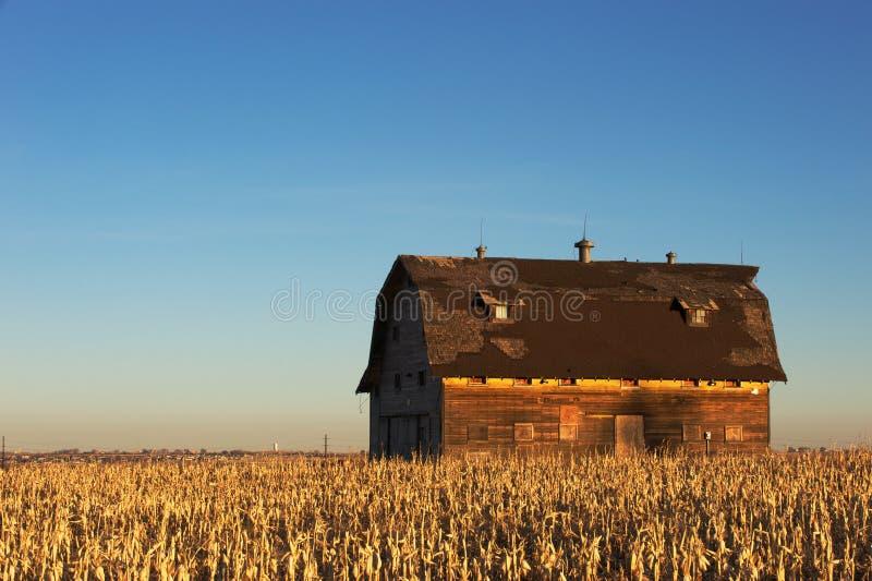 Ein Maisfeld umgibt eine rustikale Scheune stockfoto