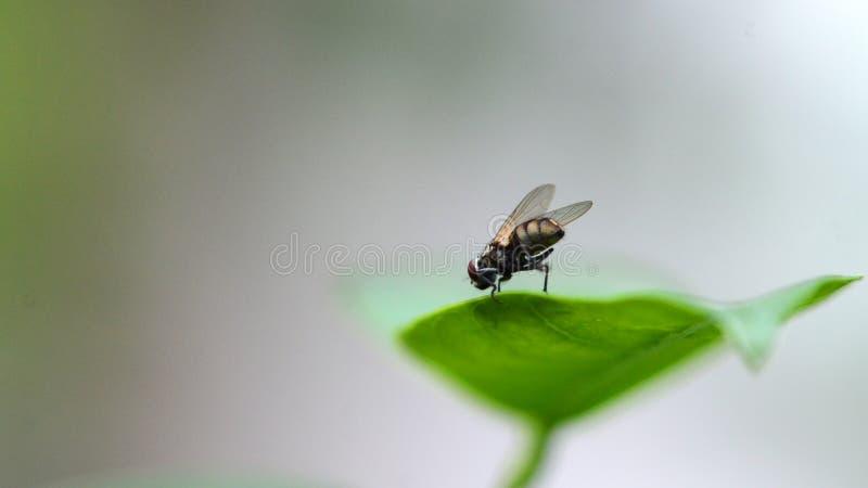 Ein Makro der Fliege auf grünem Blatt stockfoto