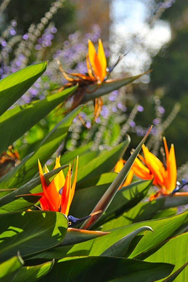 Ein Makroschuß eines Kaktusblattes stockfotos