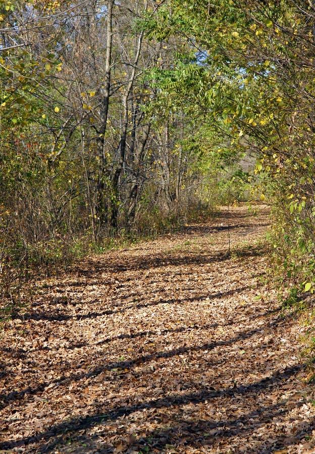 Ein malerischer Waldweg stockbild
