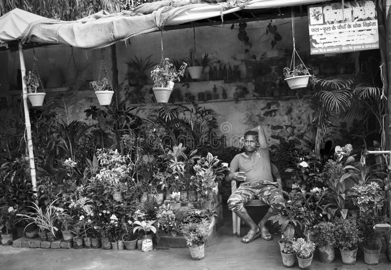 Ein Mann, der Blumen und Pflanzen auf der Straße in ganganagar, Indien, verkauft lizenzfreie stockfotografie