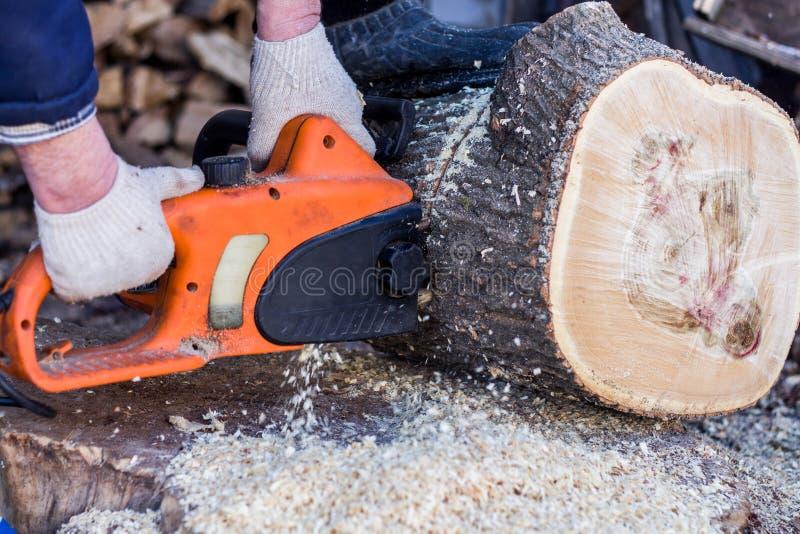Ein Mann, der eine elektrische Säge ein großer Baum sägt lizenzfreies stockbild