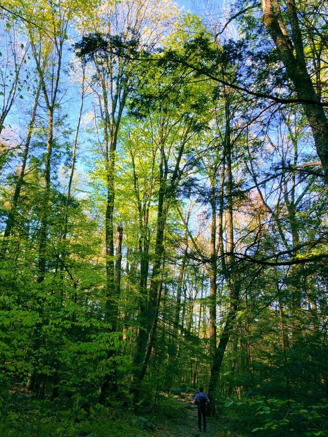 Ein Mann, der im Gratteich-Nationalparkholz wandert lizenzfreie stockfotos
