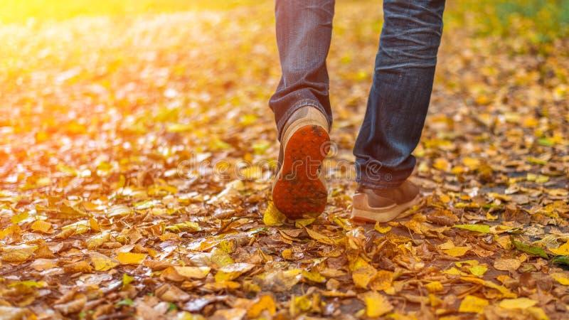 Ein Mann hört auf zu gehen Das Mädchen ` s Freundin ` s Heiße Mädchen auf der Natur im Park unter den Blättern des Gelbs Herbst stockfotos