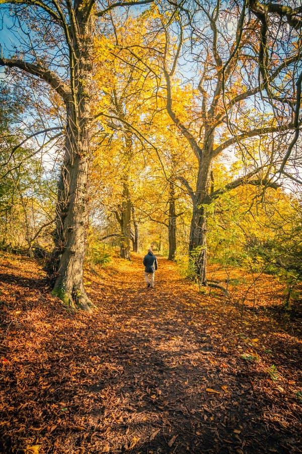 Ein Mann im schönen Herbstpark mit Baumreihe und und eine Straße im Park, lizenzfreie stockfotos