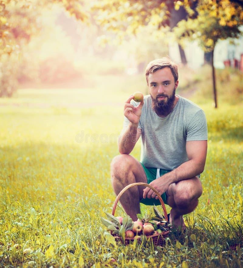 Ein Mann mit einem Bart und ein Korb von den Äpfeln, die auf dem sonnigen grünen Hintergrund, getont sitzen stockbilder