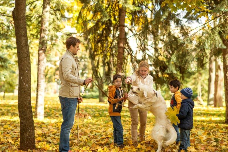 Ein Mann und eine Frau mit einem Labrador gehen in einen Herbstpark stockfotografie