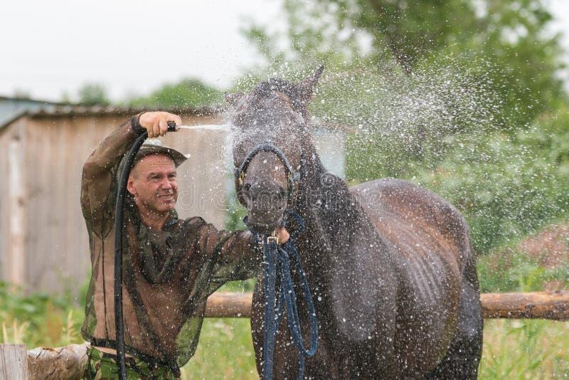 Ein Mann wäscht das Gesicht des Pferds nach einem Training stockfotos