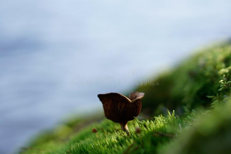 Ein mushroon mit dem Hintergrund von einem See lizenzfreie stockfotos