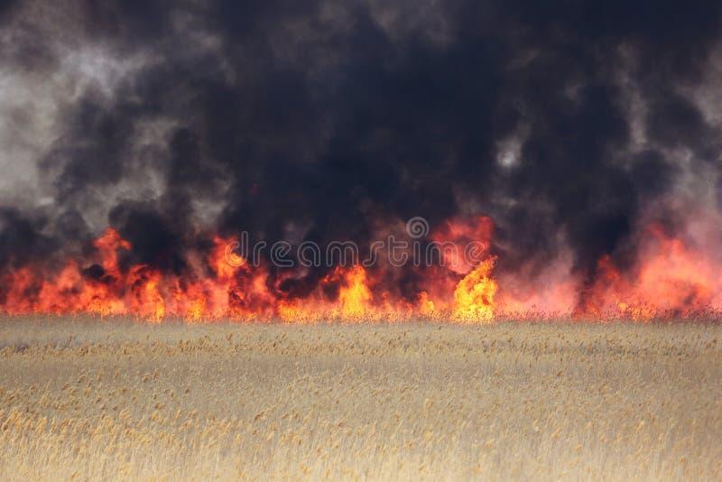 Ein natürliches Feuer stockbilder