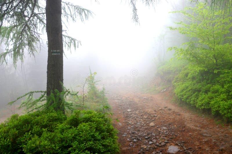 Ein nebelhafter Gebirgspfad Nebelhafter Waldnebel im Gebirgswald stockbild