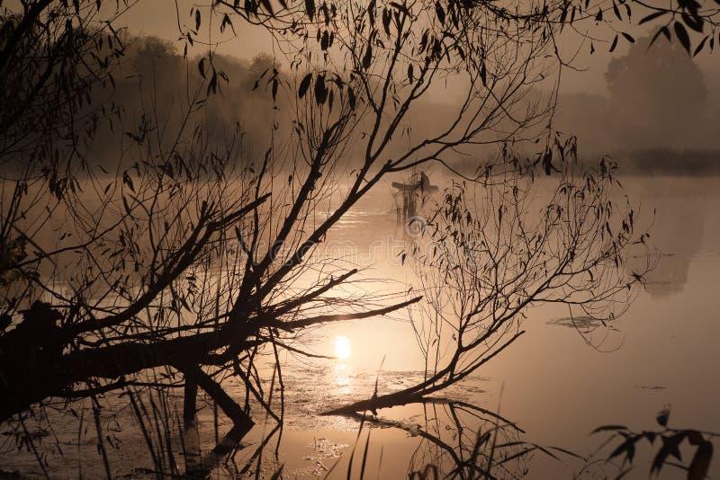 Ein nebelhafter Morgen durch den See Schattenbild von Bäumen mit Sonnenstrahlen stockfotos