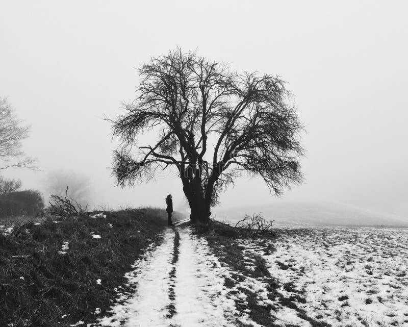 Ein nebeliger Wintermorgen lizenzfreie stockfotografie