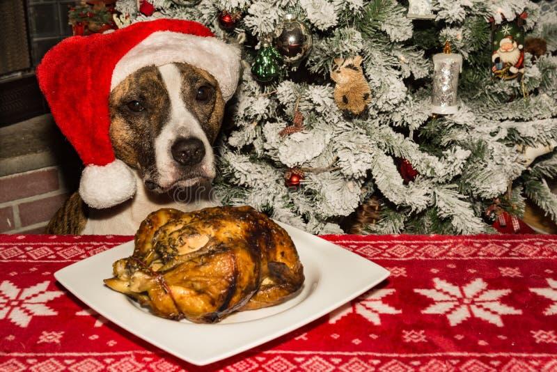 Ein netter Hund, der um das Feiertagsabendessen bittet lizenzfreies stockbild