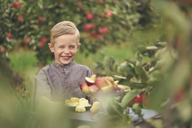 Ein netter, lächelnder Junge wählt Äpfel in einem Apfelgarten aus und hält einen Apfel stockbilder
