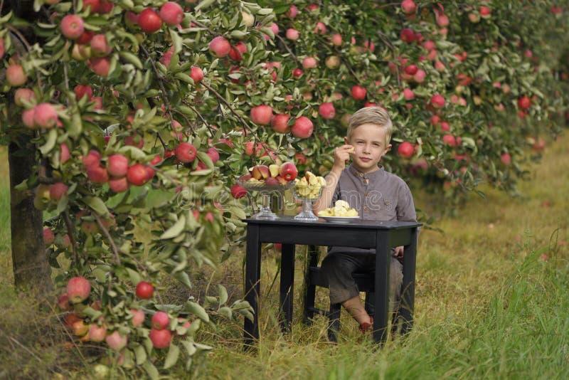 Ein netter, lächelnder Junge wählt Äpfel in einem Apfelgarten aus und hält einen Apfel lizenzfreie stockbilder