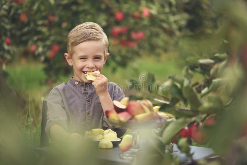 Ein netter, lächelnder Junge wählt Äpfel in einem Apfelgarten aus und hält einen Apfel lizenzfreie stockfotos