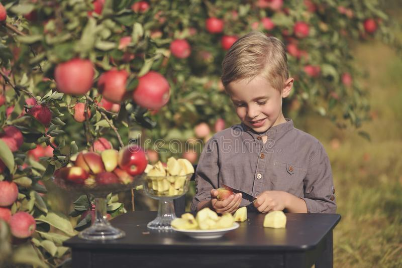 Ein netter, lächelnder Junge wählt Äpfel in einem Apfelgarten aus und hält einen Apfel stockfotos