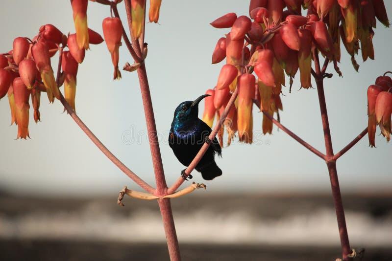Ein netter Wartevogel auf dem Baum stockfotos