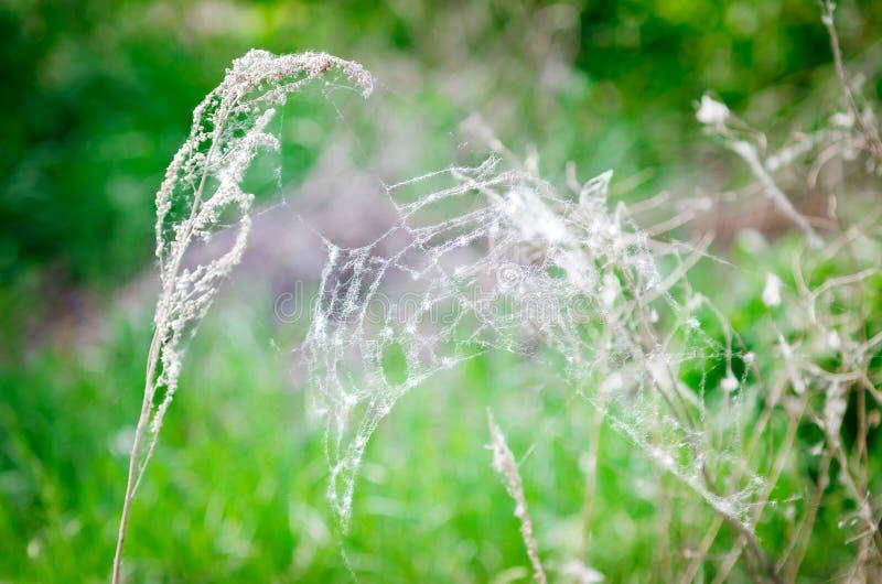 Ein Netz auf einer trockenen Niederlassung auf einem grünen natürlichen Hintergrund stockbild