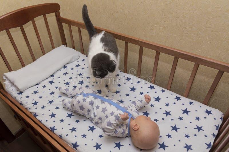 Ein neugeborenes Baby liegt in einer Krippe mit Katze stockbild