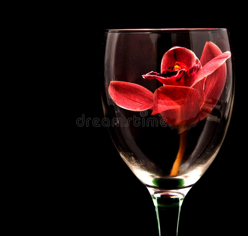 Ein Orchidee-Toast stockfotografie