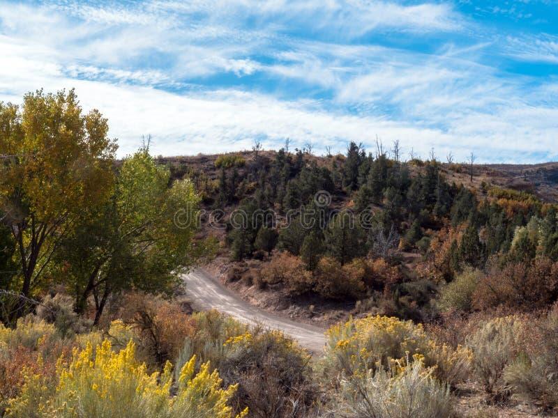 Ein ORV-Weg führt durch farbenfrohe Gräser und Blumen im Beaver Dam State Park stockbilder