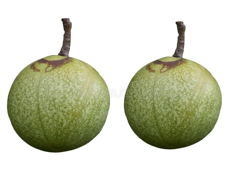 Ein Paar grünes tropische Frucht isolatd auf weißen Hintergründen lizenzfreie abbildung