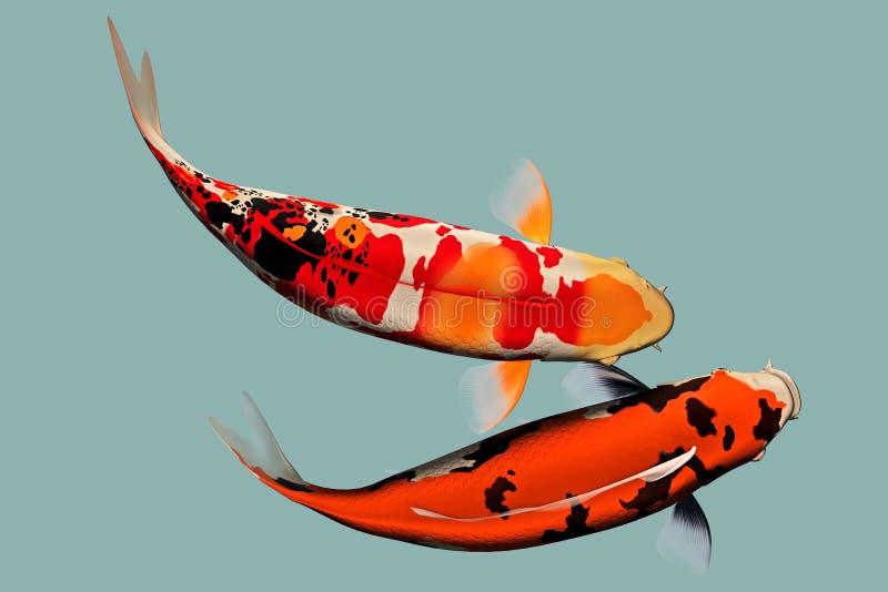 Ein Paar Japaner Koi-Fische stock abbildung