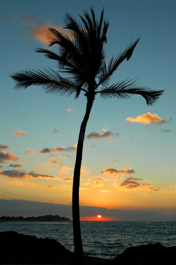 Ein Palmen-Sonnenuntergang lizenzfreies stockbild