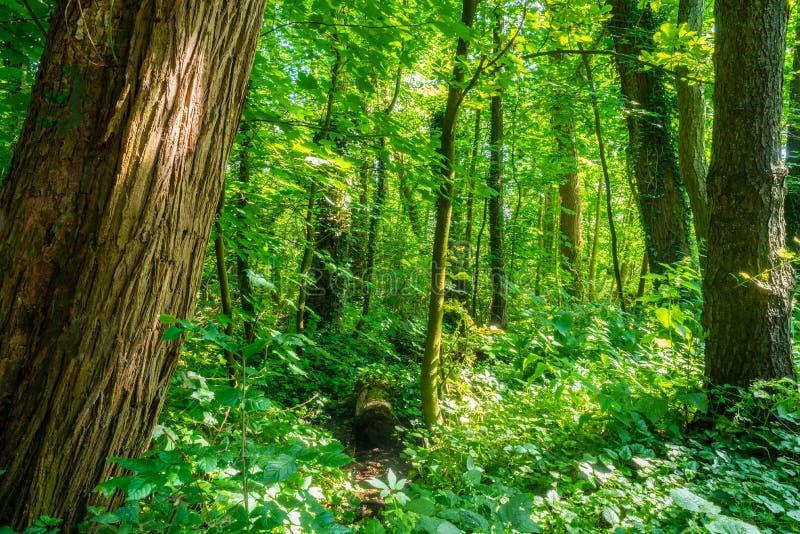 Ein Park der Aussehung wie ein Dschungel lizenzfreies stockfoto