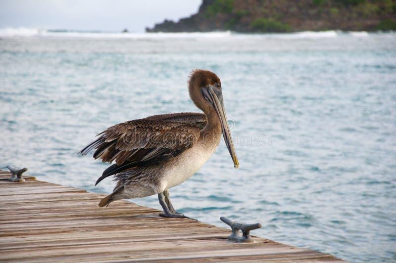 Ein Pelikan auf einem Pier lizenzfreies stockfoto