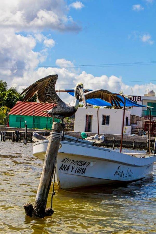 ein Pelikan sitzt auf einem Stamm lizenzfreie stockfotografie