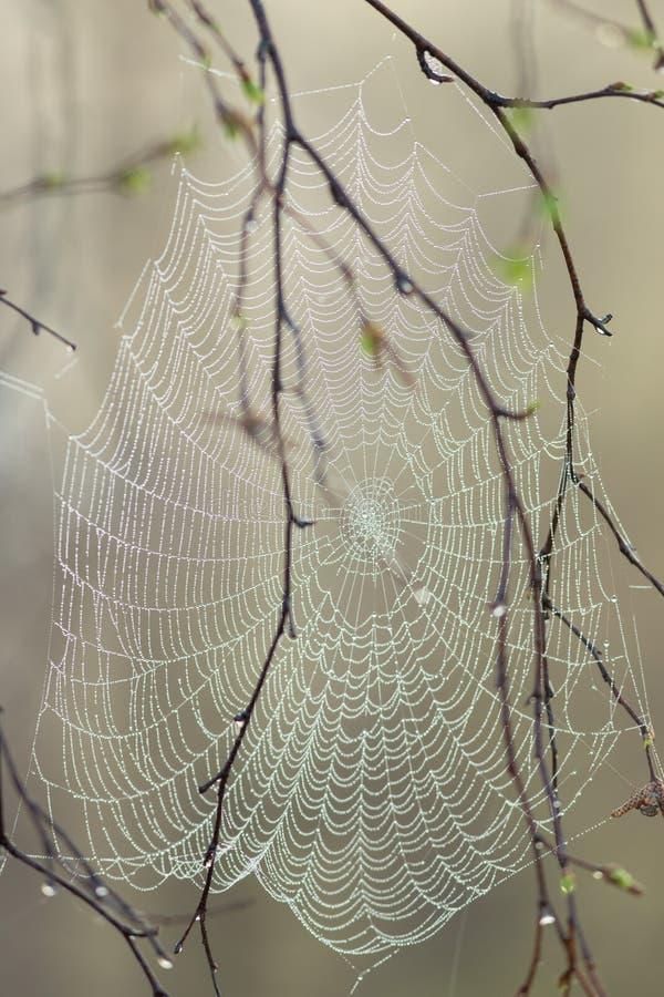 Ein perfrect Spinnennetz mit Tautropfen ohne Spinne am Morgen lizenzfreies stockfoto