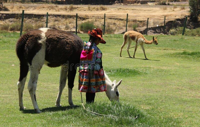 Ein peruanisches Mädchen mit Lama stockbilder