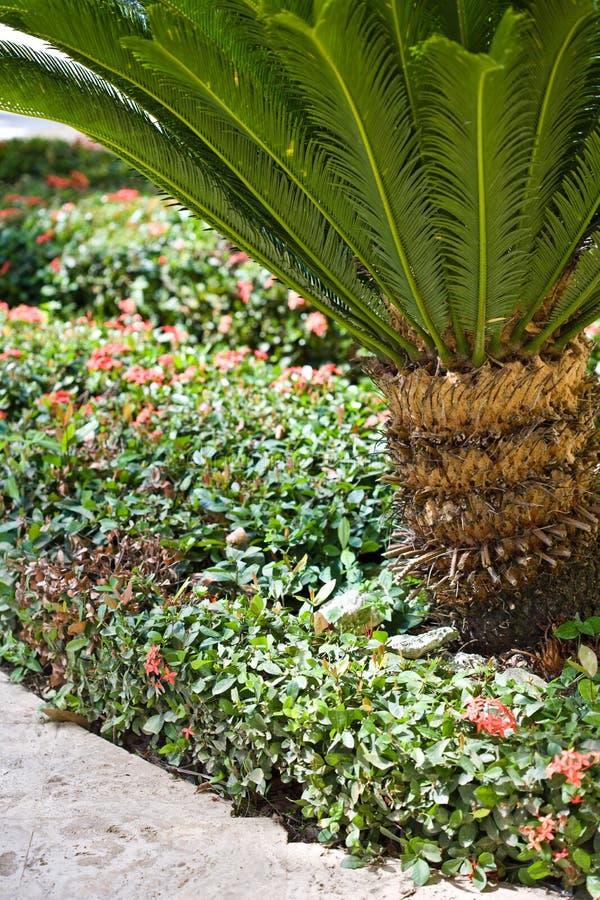 Ein Pfad in einer tropischen Rücksortierung lizenzfreie stockfotos