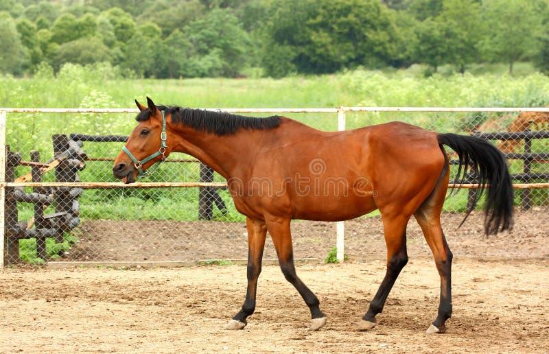 Ein Pferd stockbilder