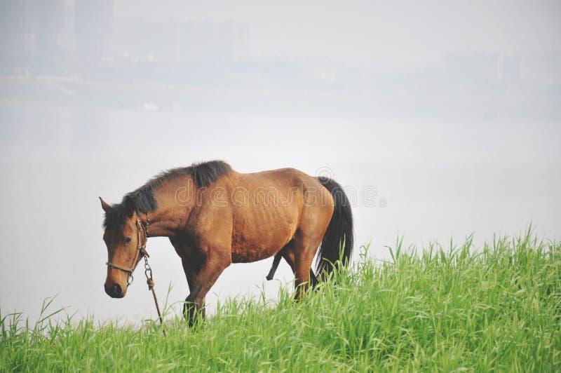 Ein Pferd außer dem xiangjiang Fluss stockbilder