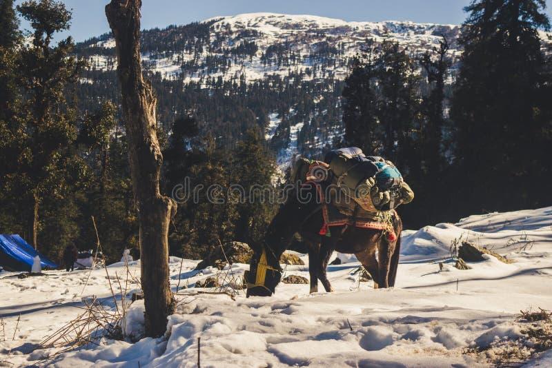 Ein Pferd auf einem Schnee mit einer Kappe bedeckten Berg stockfotografie