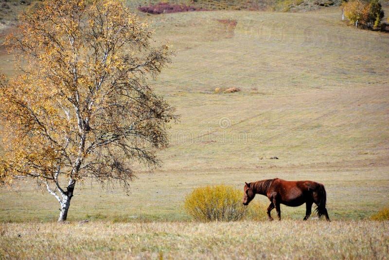Ein Pferd im Herbstgrasland lizenzfreie stockfotografie