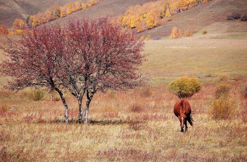 Ein Pferd im Herbstgrasland lizenzfreie stockfotos