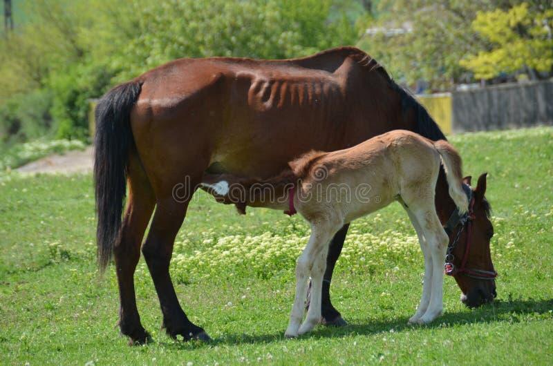 Ein Pferd mit Baby lizenzfreie stockbilder