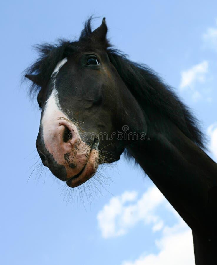 Ein Pferd `s Kopf stockfoto